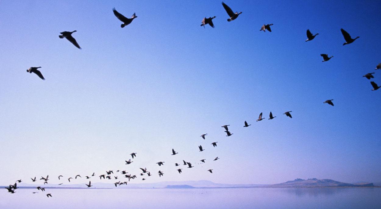 pájaros volando cielo azul